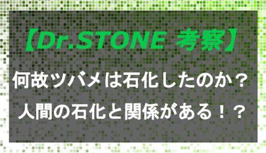 ドクターストーンで何故ツバメは石化したのか?人間の石化に関係がある!?